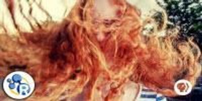 The Chemistry of Redheads (Video)