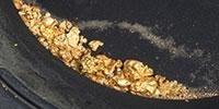 Bacteria with Midas Touch for Efficient Gold Processing