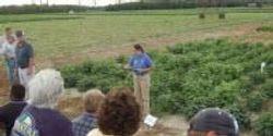 Scientist Uses Lima Bean Breeding Program to Develop Disease Resistant Lines