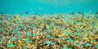 Size Matters for Marine Protected Areas Designed to Aid Coral