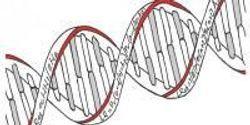 DNA Evidence Needs Statistical Back-Up