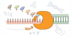 Optimizing PCR Experiments