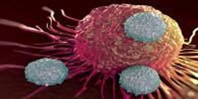 Exhausted T Cells