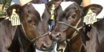 Cow Gene Study Shows Why Most Clones Fail