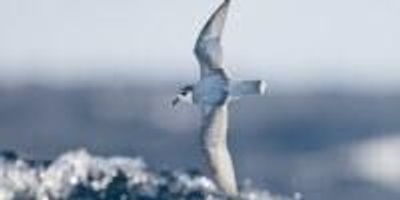 Why Do Seabirds Eat Plastic? The Answer Stinks
