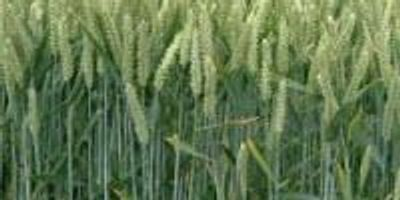 Test Improves Detection of Proteins in Starch; Aids in 'Gluten-Free' Labeling