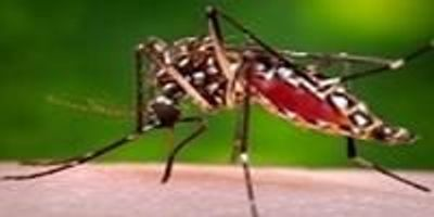 New Evidence Supports Biological Link Between Zika Infection, Guillian-Barre Syndrome