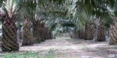 Reduced Ecosystem Functions in Oil Palm Plantations