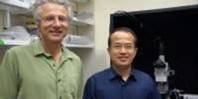 Biologists Gain Better Understanding of How Food Texture is Sensed