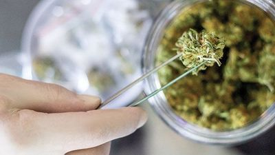 What's Your Dose? The Challenges of Cannabis Potency Testing