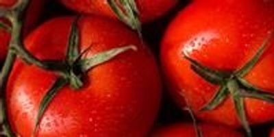 Harnessing Tomato Jumping Genes Could Help Speed-Breed Drought-Resistant Crops