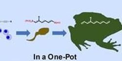 Researchers Develop Chemical Reaction Method for More Efficient Drug Production