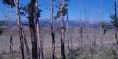 Which Trees Face Death in Drought?